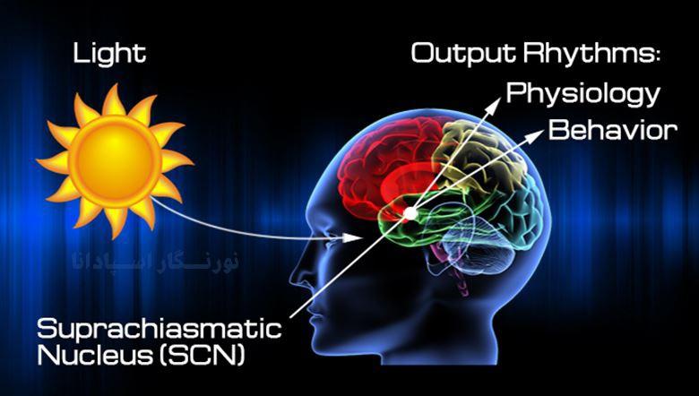 یکی از نکات مهم در بهداشت نور، تعادل در میزان دریافت اشعه فرابنفش یا UV است.