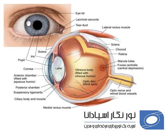 ساختار چشم چگونه است؟ آیا حساسیت چشم و حساسیت به نور طبیعی اند؟ تطابق چشم چیست